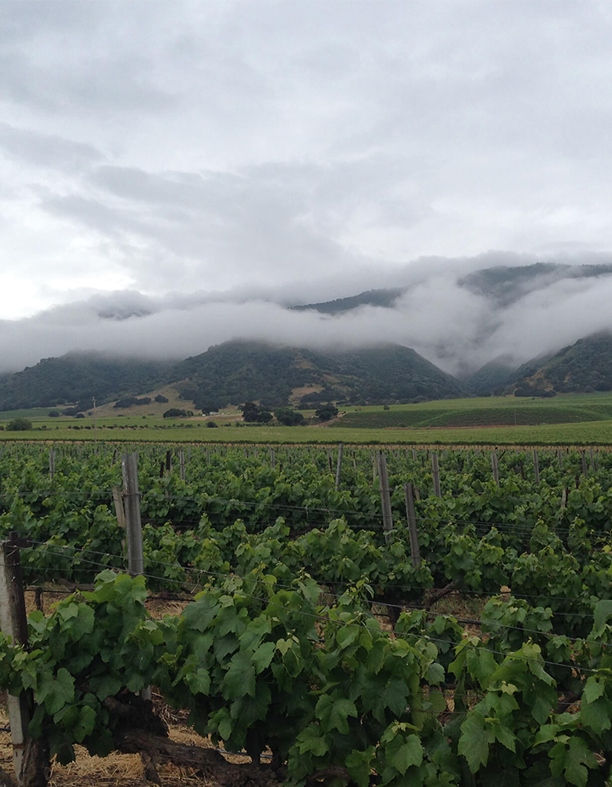 Delicato Family Vineyards Purchases Historic Santa Lucia Highlands Vineyard